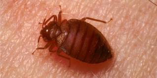 Three State Buildings Have Bed Bugs