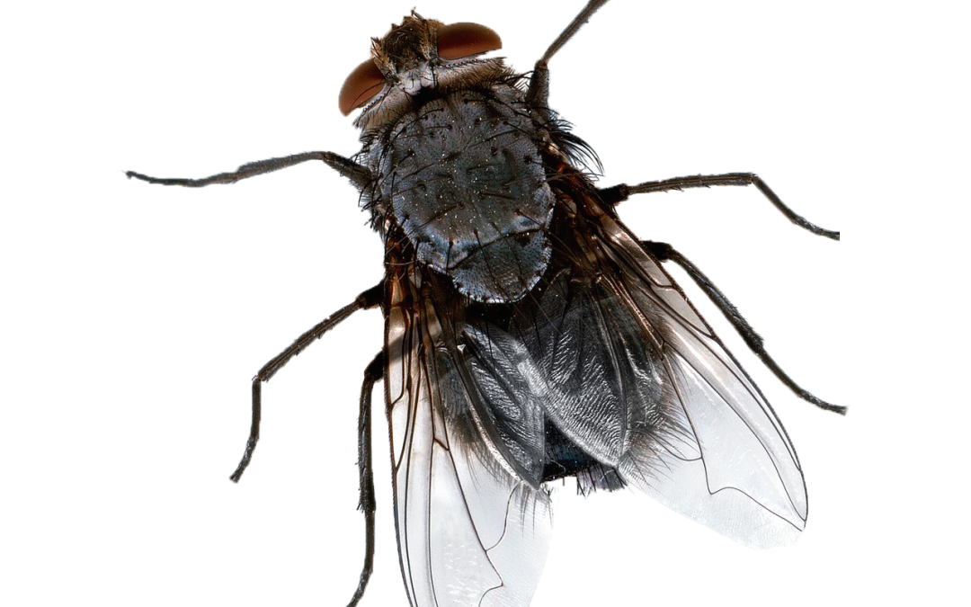 Phorid Flies Exploit A Variety Of Organic Materials In Order To Proliferate Within Homes