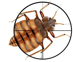 Bed Bug Inspection boston
