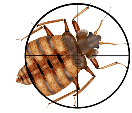 Bed Bug Infestations Are Rising In Certain Regions Of The US