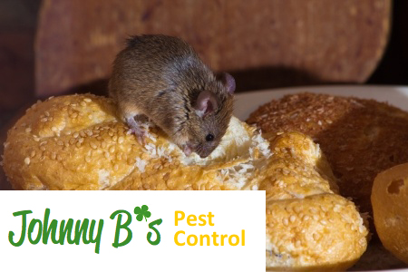 Take Precautions Against a Variety of Pests This Winter