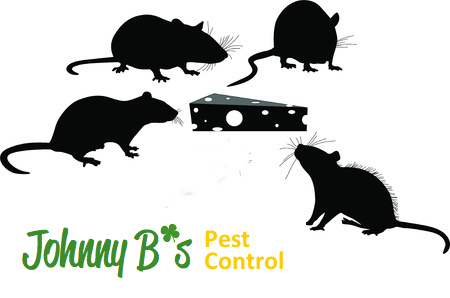 Tips to protect the home from a rodent infestation