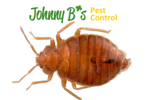 bed bug removal south boston