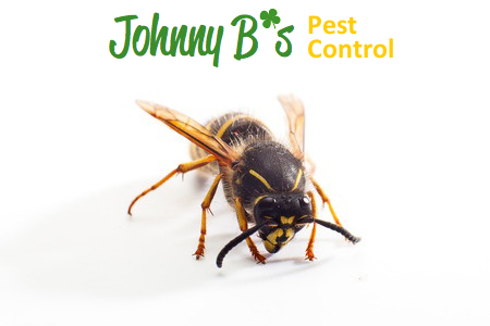 The Fall Is Coming, Which Means More Stings | Johnny B's Pest