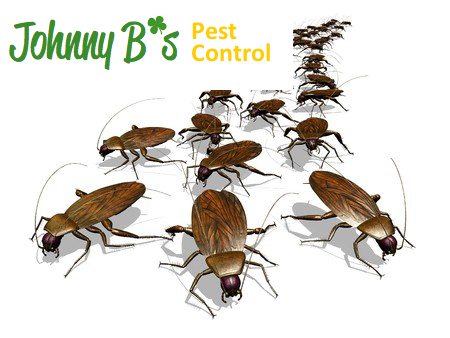 No Insects, No Chocolate! | Johnny B's  Pest Control