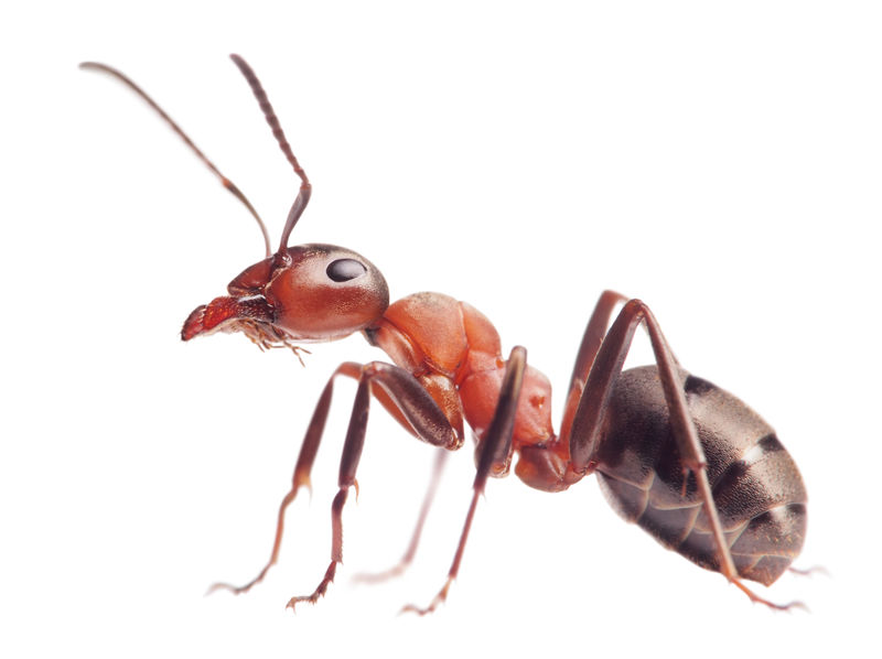 Researchers Have Long Known That Ants Contribute To Acid Rain