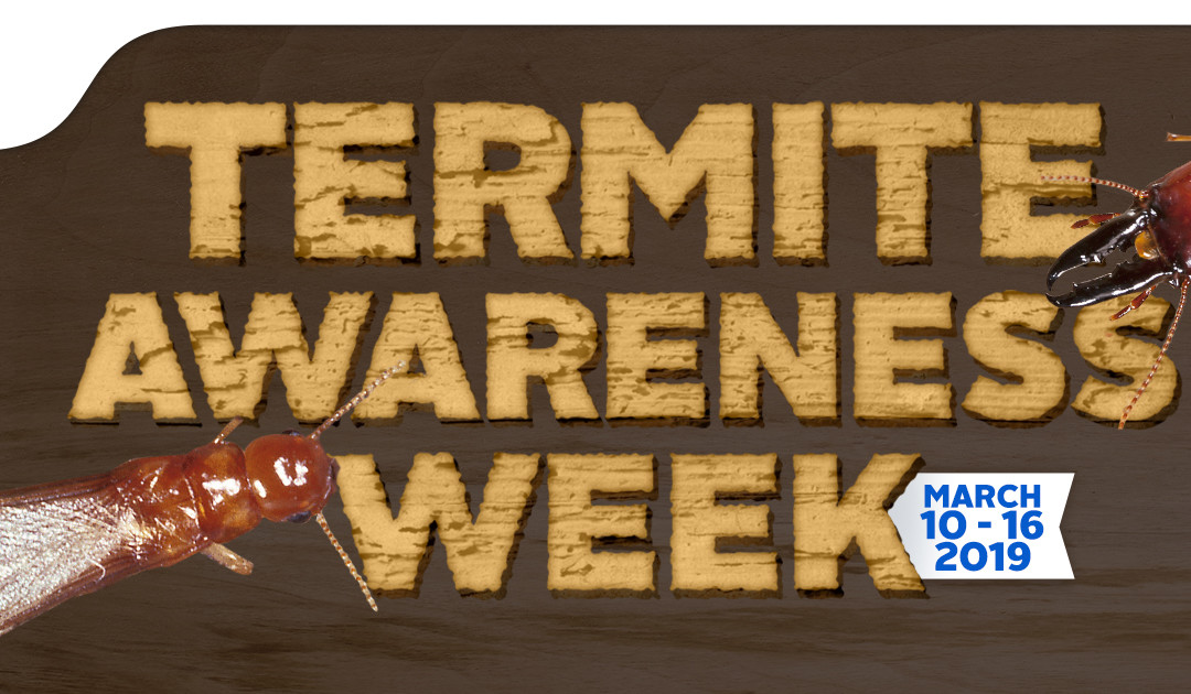 THREE WAYS HOMEOWNERS ARE INVITING TERMITES INTO THEIR HOME