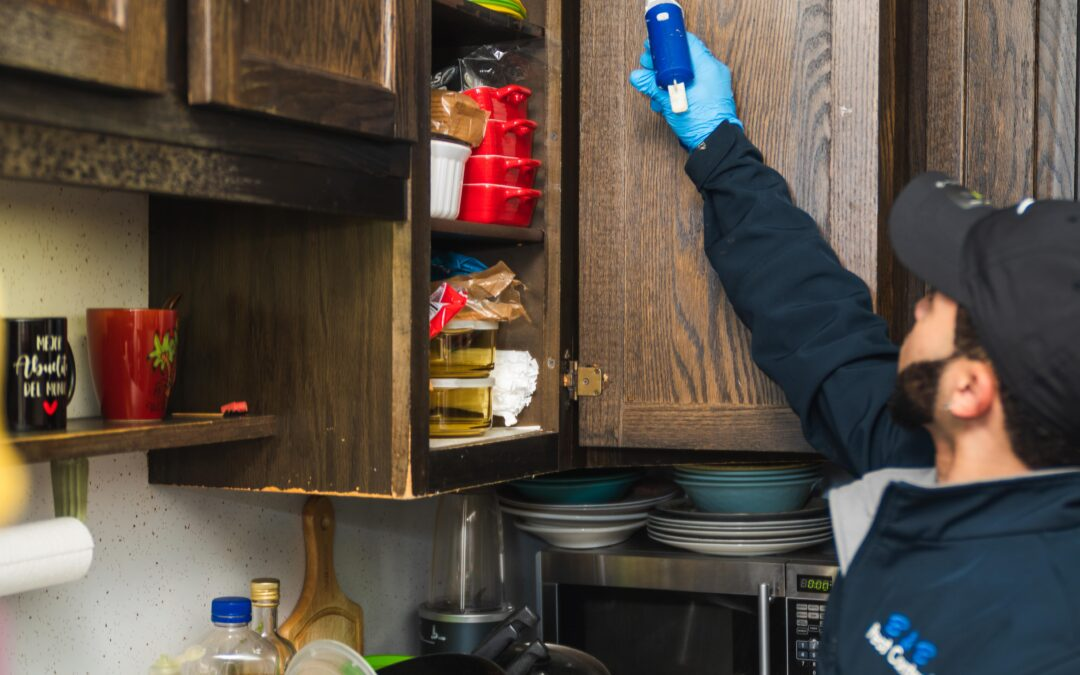 Homeowners Often Become Aware Of Cockroach Infestations While Rearranging Or Cleaning Pantries And Cupboards